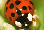 Playing with a Ladybird