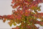 Autumn Colours 1